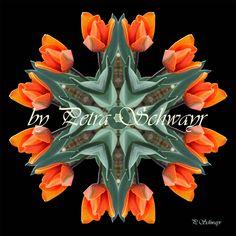 Mandala  ''Tulpe''  kreativesbypetra #mandala #tulpe #tulpen #innereruhe #inspiration Mandala, Petra, Plants, Inspiration, Tulips, Biblical Inspiration, Plant, Mandalas, Inspirational