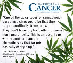 The marijuana plant has been used in just about every culture for centuries. Surely you've also heard that it is quite widely used for medicinal purposes, including by those who are faced with cancer. Click through to discover how this miracle plant helps the body heal. Article by Ty Bollinger. Please re-pin to support us on our mission to educate, expose, and eradicate cancer! // The Truth About Cancer <3