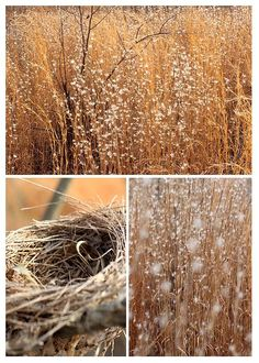 Nest Field by AR Annahita