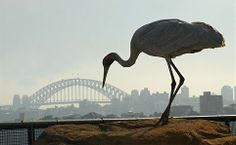 Taronga Zoo, inc return ferry from Circular Quay $52 ea. See http://www.131500.com.au/tickets/explore/zoopass
