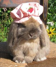 this bunny :( i am sad right now Cute Creatures, Beautiful Creatures, Animals Beautiful, Animals And Pets, Funny Animals, Cute Baby Bunnies, Bunny Bunny, Cute Little Animals, Animal Crossing