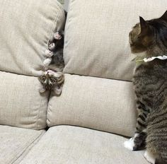 I left you for 5 minutes and look at you now... #fun, #Cats