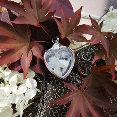 This gorgeous heart terrarium looks amazing no matter what you put inside! Pearls, flowers, a secret message... anything you want to keep close to your heart ❤