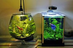 best betta fish tank for care
