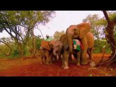 For the Love of Elephants PART 2- David Sheldrick Wildlife Trust