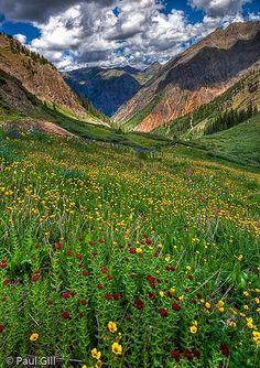 Stony Pass high alpine wildflowers | Wildflowers carpet the … | Flickr