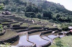 大井谷 Shimane, Japan