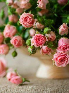 Beautiful Rose Flowers, Beautiful Flower Arrangements, Love Rose, Vintage Flowers, Pink Flowers, Floral Arrangements, Beautiful Flowers, Rose Flower Wallpaper, Corporate Flowers