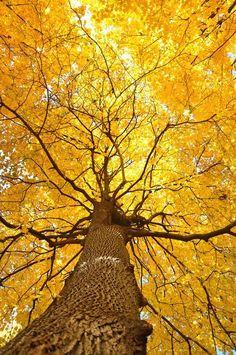 """"" Shades Of Yellow Color Names For Your Inspiration – Going To Tehran """" Trucos imprescindibles para evitar mostrar pinceladas al pintar muebles """" Beautiful World, Beautiful Places, Beautiful Pictures, Trees Beautiful, Simply Beautiful, Foto Art, Shades Of Yellow, Autumn Trees, Autumn Leaves"