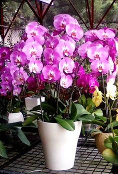 Flower Bouquet and Karangan Bunga Bouquet, Flowers, Plants, Bouquet Of Flowers, Bouquets, Plant, Royal Icing Flowers, Floral Arrangements, Flower