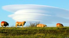 Lenticular clouds. Awesome. And the source of many UFO reports.