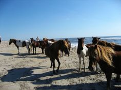 5 Best Places to Camp on the East Coast-I'd love to go the beach with with wild horses!!