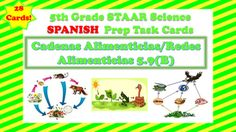 The following is a set of task cards of SPANISH that focus on Food Chains and Food Webs. The following task cards...-Contain 28 Task Cards-Contain questions on Food Chains, Food Webs and vocabulary concepts associated with these concepts.-Mirror questions like those seen on the 5th Grade Science Spanish STAAR-Rigorous Questions-Includes recording sheet and answer key