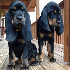 Oh My Gosh! I want these babies!