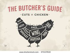 Cut of meat set. Poster Butcher diagram and scheme - Chicken. Vintage typographic hand-drawn. Vector illustration - stock vector