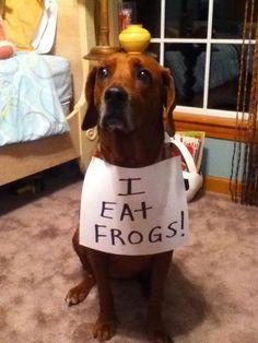 Dog Shaming - Well, I have to admit that the legs are pretty good in a nice garlic sauce...