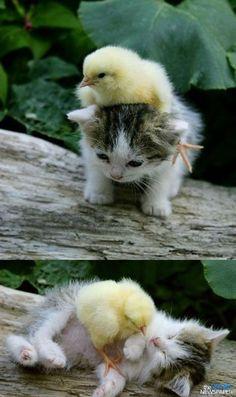 <3 Super cute