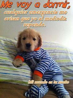 Golden retriever puppy in footy pajamas! :) Dogs do inspire :) Puppies In Pajamas, Cute Dogs And Puppies, I Love Dogs, Doggies, Funny Puppies, Dog Pictures, Animal Pictures, Cute Baby Animals, Funny Animals