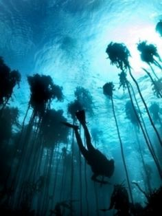The World Under the Water. Under The Water, Under The Sea, Underwater Photos, Underwater Photography, Magic Places, Kelp Forest, Tree Forest, Image Nature, Deep Blue Sea