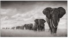 Stunning African photography by Nick Brandt. Great cause too.