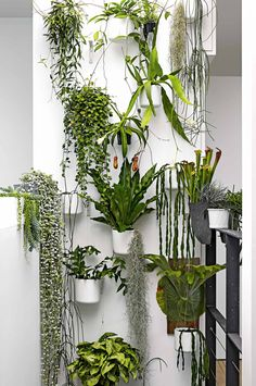plant waterfall From the September 2015 issue of Inside Out magazine. Styling by Deb McLean. Photography by Colin Doswell. Available from newsagents, Zinio, http://www.zinio.com, Google Play, https://play.google.com/store/magazines/details/Inside_Out?id=CAowu8qZAQ, Apple's Newsstand, https://itunes.apple.com/au/app/inside-out/id604734331?mt=8ign-mpt=uo