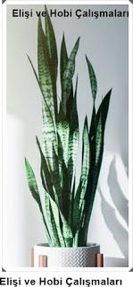 What are Indoor Plants Growing Without Light?- What are Indoor Plants Growing Without Light? Care 6 – salon çiçekleri What are Indoor Plants Growing Without Light? Balcony Flowers, Flower Planters, Living Room Plants, Growing Plants Indoors, Flower Designs, Flower Ideas, Snake Plant, Flower Decorations, Houseplants