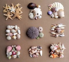 .                               Seashells are  AMAZING  architectural wonders. The mollusks that inhabit these seashells live in the depths...