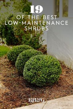 Garden Plants, Shade Garden, Home Landscaping, Front Yard Landscaping, Hedges, Curb Appeal, Lawn And Garden, Home And Garden, Front Porch Flowers