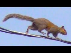 images of squirrel on wire - Google Search