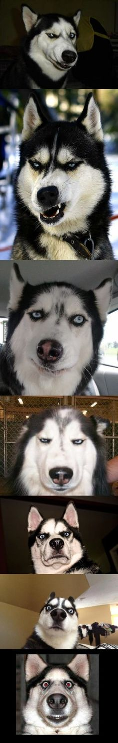 the perfect acting skill of husky
