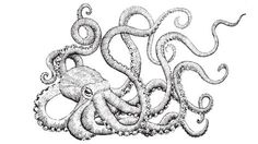 black and white octopus drawing - Google Search