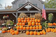 Welcome Guide Fall   The Vineyard Gazette - Martha's Vineyard News