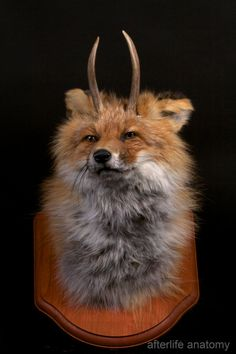 Antlered Fox Taxidermy Mount Rogue Taxidermy by afterlifeanatomy