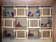 pigeons loft - Sök på Google