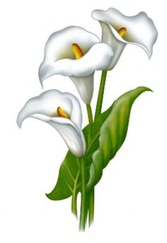 Embroidery Flowers Pattern Calla Lily Flowers Watercolor Pencils Watercolor Art One Stroke Painting Wedding Vintage Fused Glass Art Tempera Learn To Paint Lily Painting, Fabric Painting, Painting & Drawing, Flower Sketches, Art Sketches, Art Drawings, Watercolor Flowers, Watercolor Paintings, Lilies Drawing