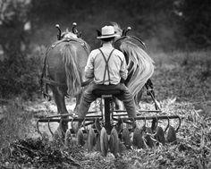 "Amish farmer ""disc-ing"" a field."