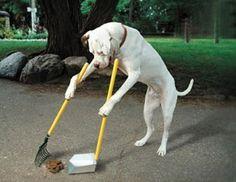 Cão educado