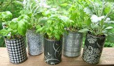 Aromatiques en boites de conserve sur Créa Tinou