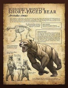 Design and Illustration for Pleistocene (Ice Age) specimens and fossils, natural history museum signage. Prehistoric World, Prehistoric Creatures, Mythical Creatures, Short Faced Bear, Extinct Animals, Mammals, Ice Age, North America, America America
