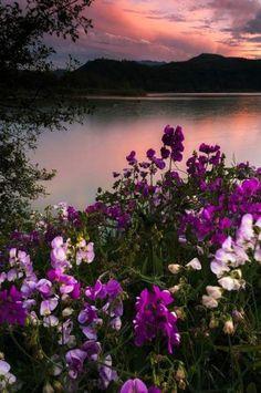 Paisagem com lago e flores