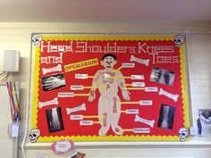 the human body bulletin boards - Google Search