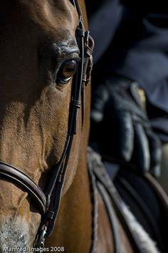 So Close Horse and Rider | Flickr - Photo Sharing❤️