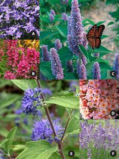 DIY-Pre-planned Butterfly Garden-(Talk about a DREAM Garden...)