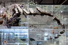 In Denmark, David Altmejd organizes a diorama worthy of the Natural History Museum.