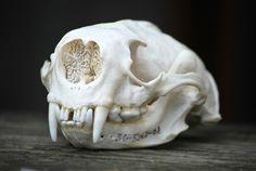 Animal Skeletons, Animal Skulls, Crane, Animal Bones, Sea Otter, Human Skull, Vertebrates, Skull And Bones, Creature Design