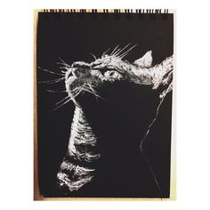 #Draw #Drawing #Cat #BlackandWhite #ilustration #Art #painting