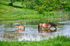 Our Love Affair with the Wild Horses