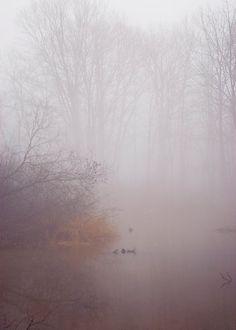 Forest photograph tree photo winter fog nature wall art purple brown fine art tree photograph foggy landscape 5x7