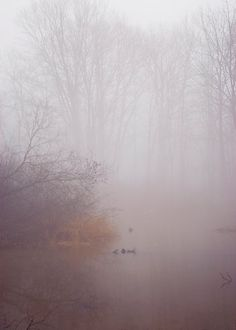 Forest photograph tree photo winter fog nature wall art purple brown fine art tree photograph foggy landscape 5x7