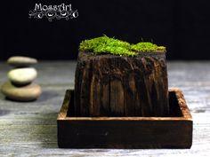 Moss Art, Zen Garden